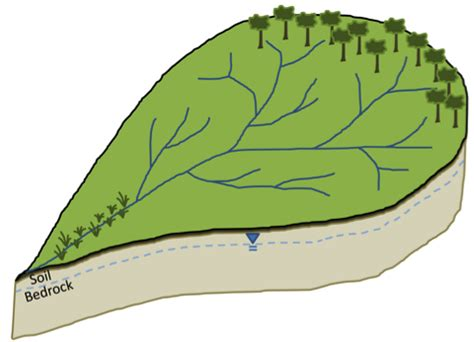 Formative Assessment 1: Watershed