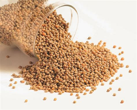 EasyMeWorld: All About Sorghum