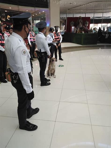The viral stray dog in a Taguig mall becomes an official