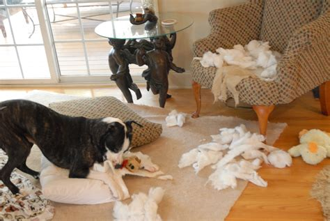 puppy proofing your home   Paws In Training