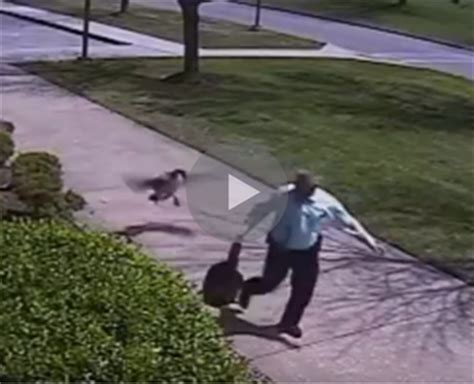 Goose Shows Police Detective The Literal Meaning Of Wild