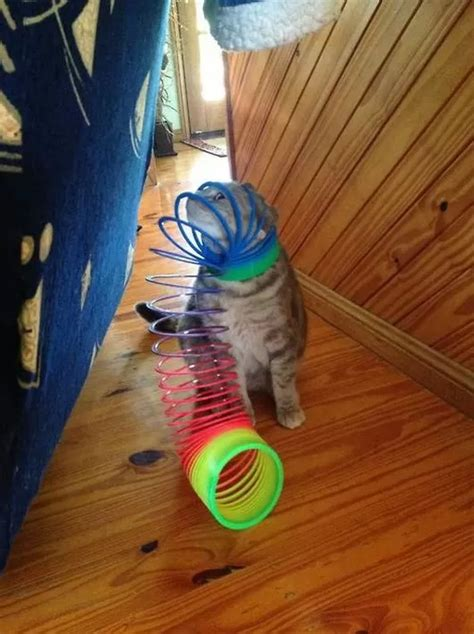 Cats Doing What They Do Best, Getting Stuck in Things (10