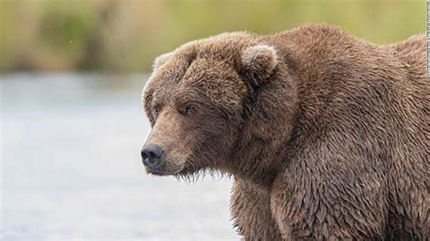 Fat Bear Week is finally here, and we're ready to cast our